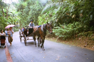 The only horse-drawn cart in Singapore