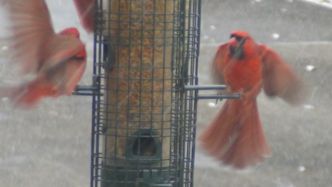 Cardinals ready to take off