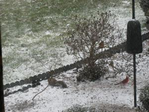 A squirrel gets in on the action