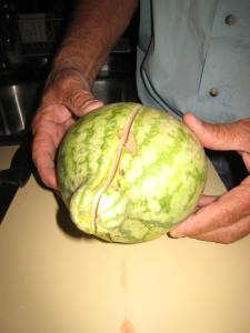 My dad's homegrown watermelon. They got a late cold spell after he planted his little garden.