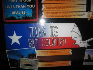 It sure is. You can take bat tours in Austin and Houston